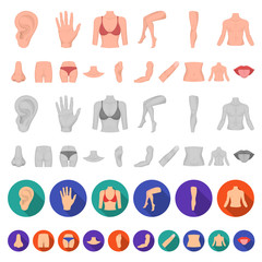 Part of the body, limb cartoon icons in set collection for design. Human anatomy vector symbol stock web illustration.