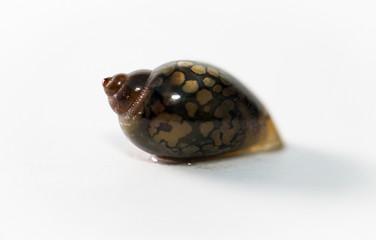 Detail einer Schnecke aus dem Aquarium