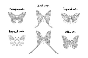 Set of icons of various moth with names on white