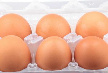 chicken egg in plastic case