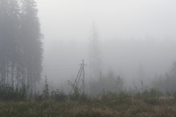 Landscape forest in fog