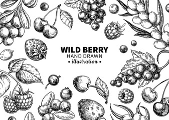 Wild berry drawing. Hand drawn vintage vector frame. Summer fruit set