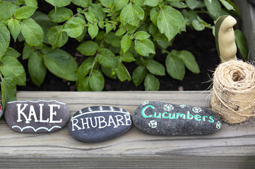 Working in the vegetable garden / kale rhubarb cucumber food markers with trowel