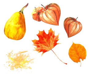 Watercolor thanksgiving set with isolated pumpkin,  maple leaves and physalis. Could be used for postcards, invitations, price tags, decoration purposes.
