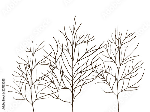 Black And White Hand Drawn Fall Abstract Trees Without Leaves On