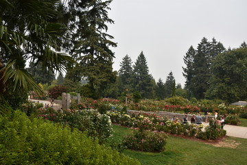 International Rose Test Garden at Washington Park in Portland, Oregon