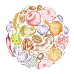 Vector collection of hand drawn autumn vegetables round shape