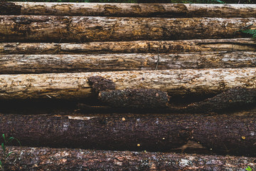 Pile of aged weathered worn old logs 3