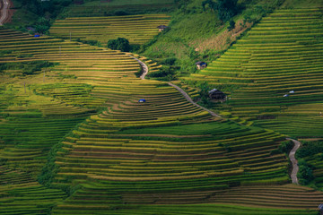Printed roller blinds Rice fields Mu Cang Chai terraces rice fields in harvest season