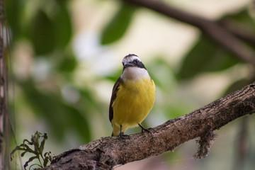 bird 1 closeup