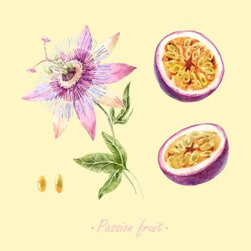 Watercolor passion fruit vector set