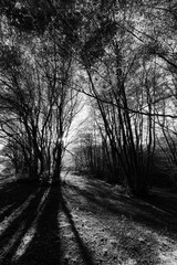 Beech trees in Canfaito forest (Marche, Italy) at sunset with long shadows