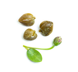 Capers on white background. Caper plant and buds