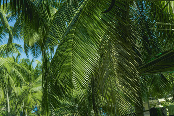 Tropical palm leaves, floral pattern.