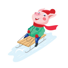 Funny pig sledding from the mountain. Vector