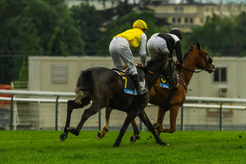 Duel in a race between two horses, view from behind / Two horses fighting for the first place during a steeplechase horse race; view from 3/4th [behind].