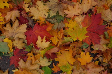 Autumn background with with colorful leaves