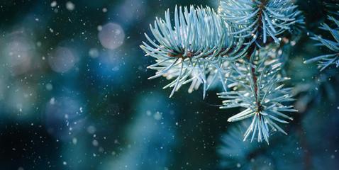 Frostige Tannenzweige als weihnachtlicher Hintergrund Banner Wall mural