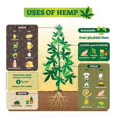 Uses of hemp vector illustration. Seeds, leaf, flower, root and stalk use.