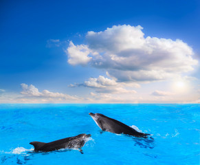 Dolphins Jumping .  Beautiful dolphin jumping from shining water  .   landscape at sunset .