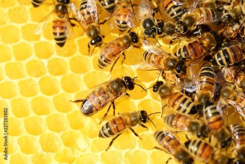 honey bees endangered - 1024×683
