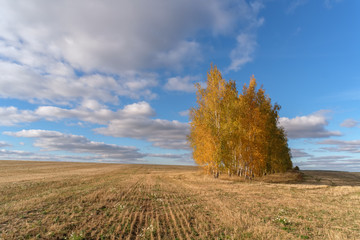 beautiful autumn landscape with yellow trees in the field