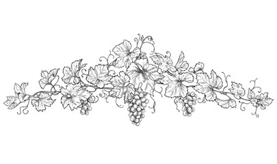 Hand Drawn Decoration with Grapes Fototapete