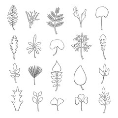 Types of leaf. Outline leaves of different types, isolated on white background. Hand drawn Monochrome realistic illustration