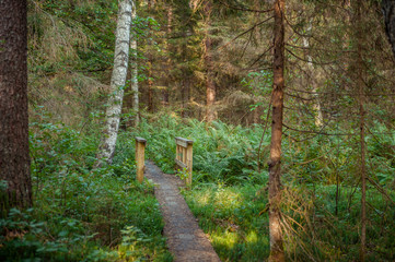 Hiking trail through mixted forest and a bridge across a small river  in summer. Hupassaare study trail. Landscape. Soomaa National Park. Estonia. Baltic. Soft focus.