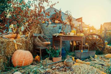 Autumn vintage decor with pumpkins