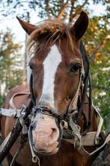 Horse portrait in a village