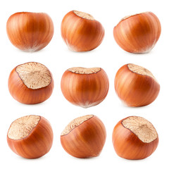 hazelnut isolated on white background, clipping path, full depth of field