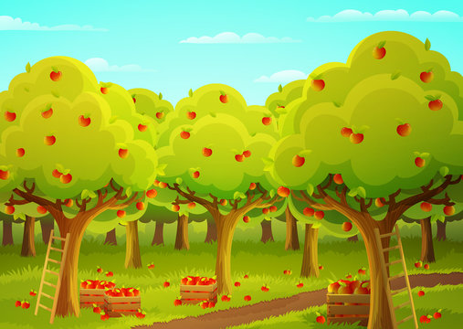 Colorful landscape of an apple orchard during harvest. Ladder and wooden crate filled with ripe red apples. Vector illustration.