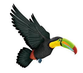 Keel-billed toucan, toucan en vol, animal, bec, nature, tropical, faune, isolé, sauvage, blanc, coloré, brésil,
