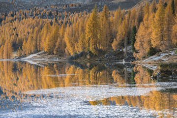 Golden larches reflected on the waters of Lake Federa, Dolomites, Cortina D'Ampezzo, Italy