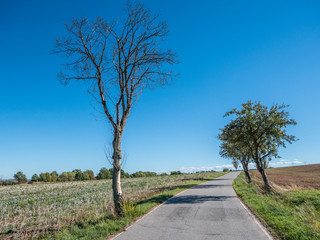 Klimawandel toter Baum