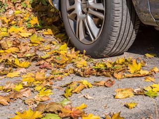 Grip auf der Straße im Herbst