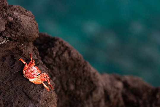 Red crab on rock near the sea. Sunset in holiday paradise resort on Grand Comore island, Comoros. Beautiful sunset light of sun going into the sea. Moroni, Comoros.