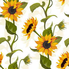 Sunflower vector seamless pattern floral texture on bright backgrounds