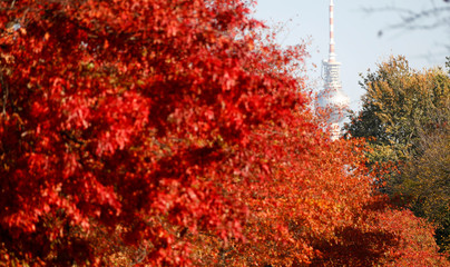 Autumnal trees are pictured in front of the television tower in Berlin