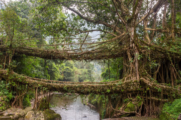 Poster de jardin Ponts Famous Double Decker living roots bridge near Nongriat village, Cherrapunjee, Meghalaya, India. This bridge is formed by training tree roots over years to knit together.