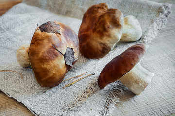 Mushrooms boletus on the table on a napkin.