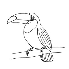 Toucan isolated on white background for coloring book page vector