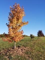 Coloured tree in autumn