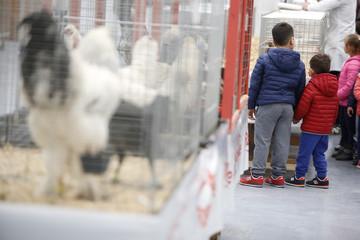 bambini in mostra animali