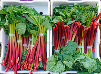 Crates of green and red rhubarb stalks at a farmers market
