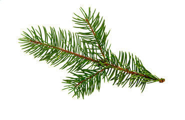 Fir tree branch isolated on white. Pine branch. Christmas fir.