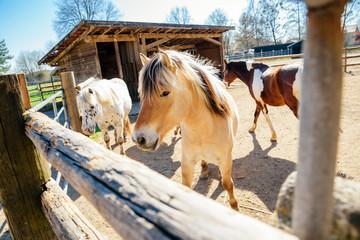 Pferde auf dem Pferdehof / Reiten in Bayern