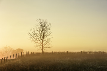 Fototapete - Tree and Fence in Meadow with Morning Fog