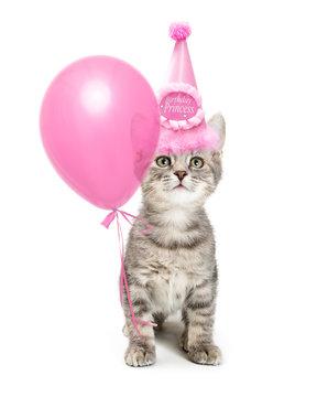 Cute Kitten Wearing Pretty Pink Birthday Hat